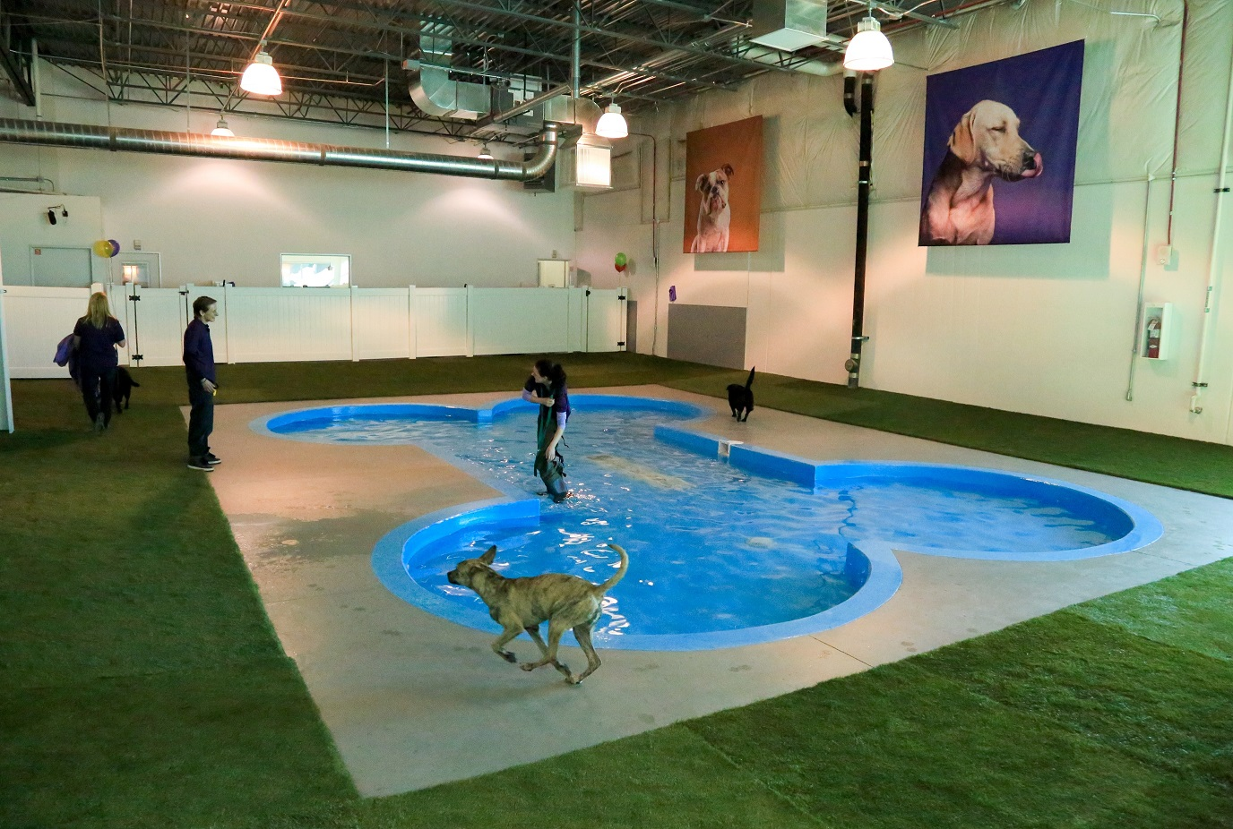 Dog Day Care Miami